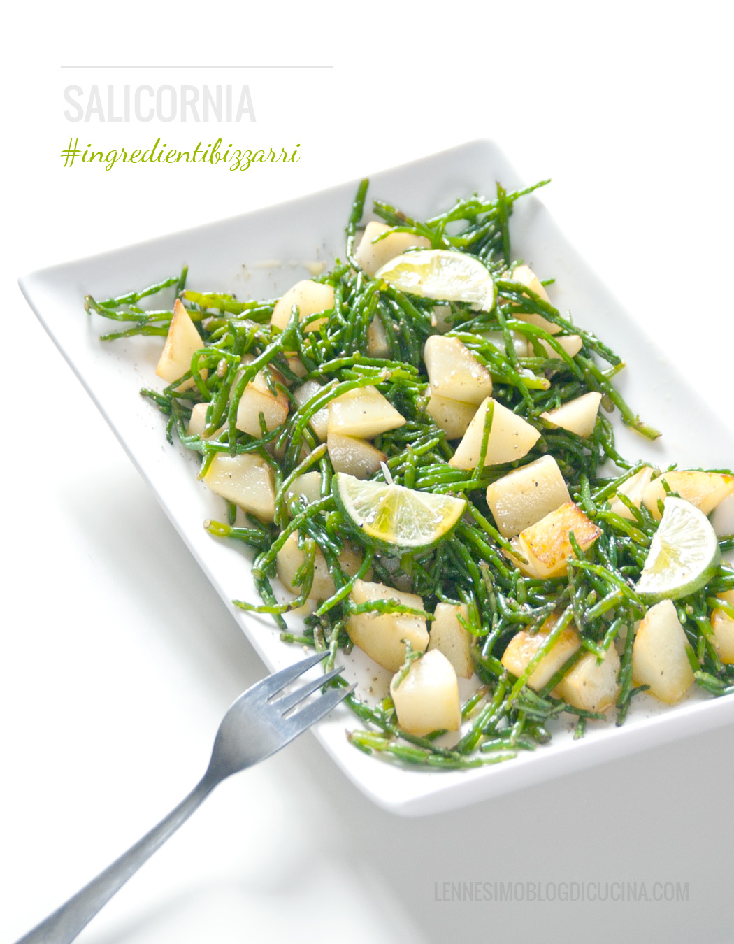 salicornia patate