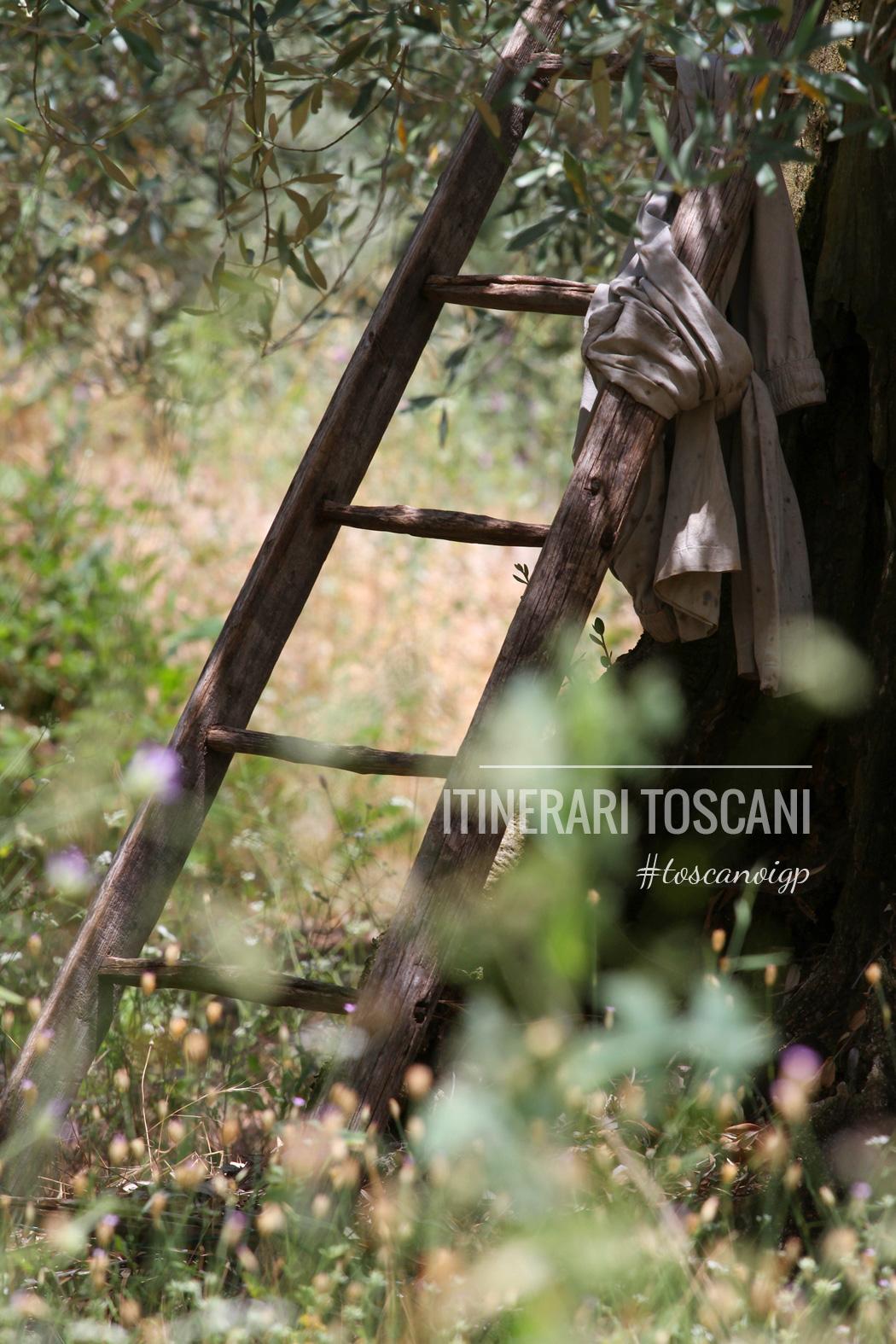 Toscano-IGP