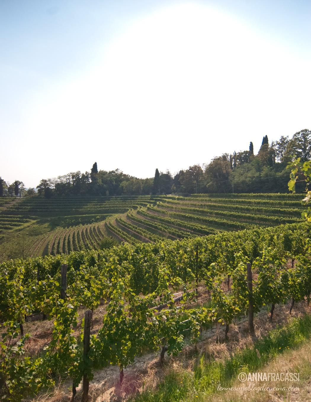 cantina bastianich wines Buttrio