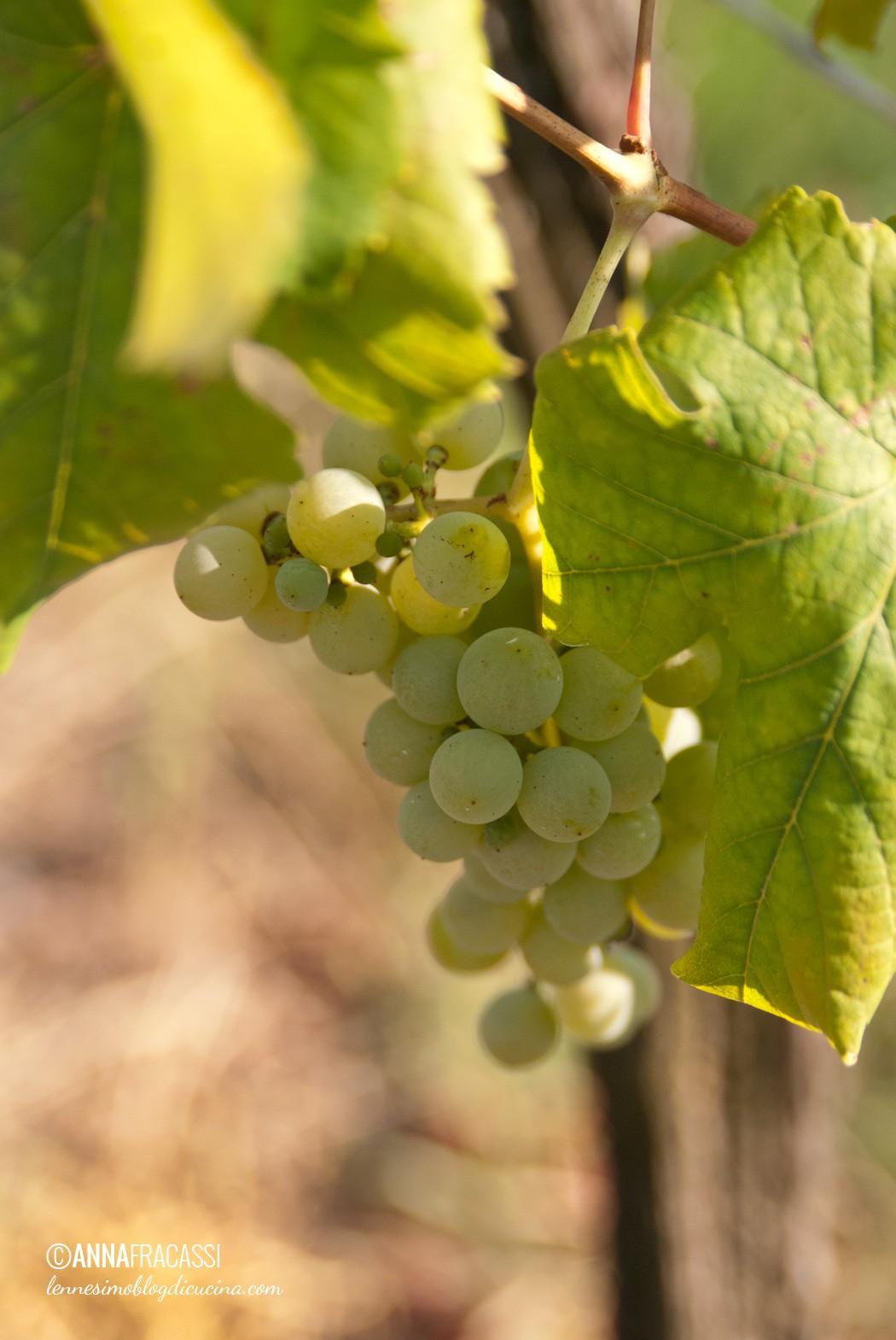 cantina bastianich wines