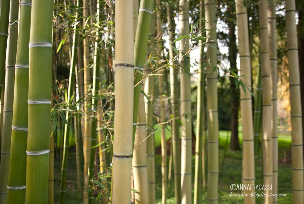vistorta - il canneto progettato dal garden designer Russel Page