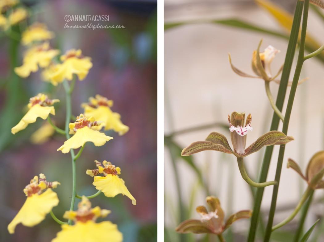vistorta - la serra delle orchidee